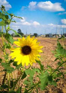 Jak aktywnie spędzać czas z rodziną na obszarze wiejskim?
