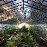 Nowe formy uprawy roślin