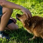 Pies – przyjaciel człowieka
