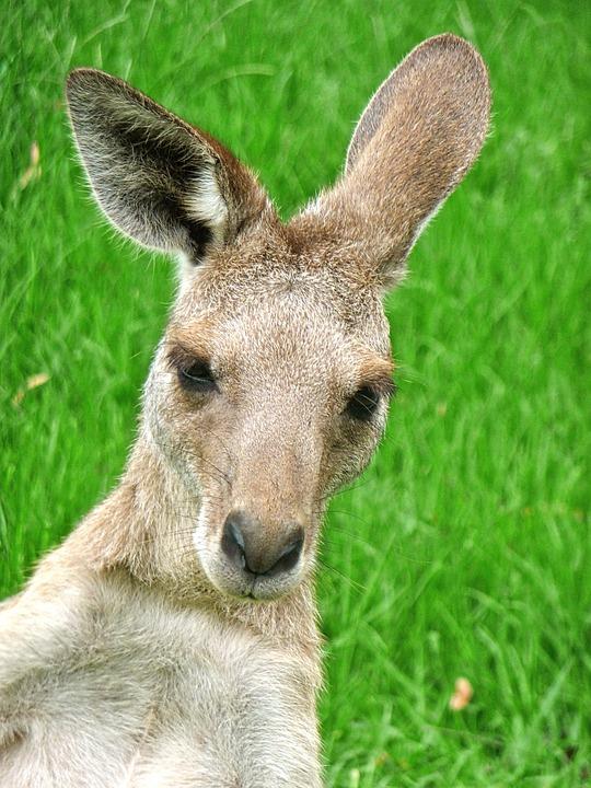 wycieczki Australia