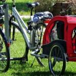 Najważniejsze cechy przyczepek rowerowych