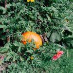 Zadbaj o swój ogród – zastosowanie agrowłókniny