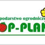 Top Plant – sadzonki frigo