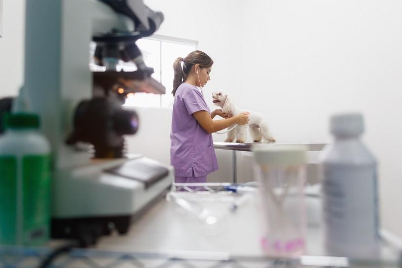 Rehabilitacja psa